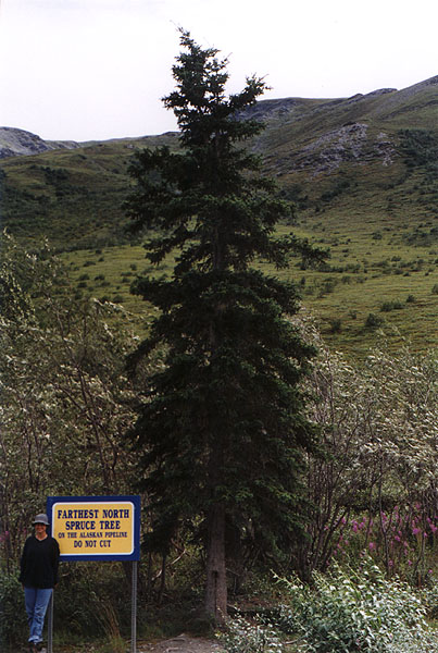 [The Northernmost Tree]